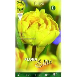 Τουλίπα Yellow Pomponette