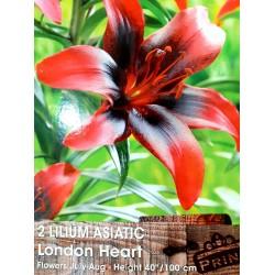 Λίλιουμ Asiatic London Heart