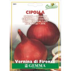 Σπόροι Κρεμμύδι