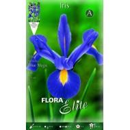 Ίριδα Blue Magic