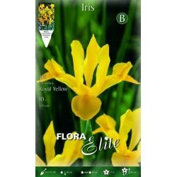 Ίρις Royal Yellow