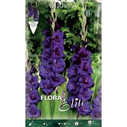 Γλαδιόλα Purple flora