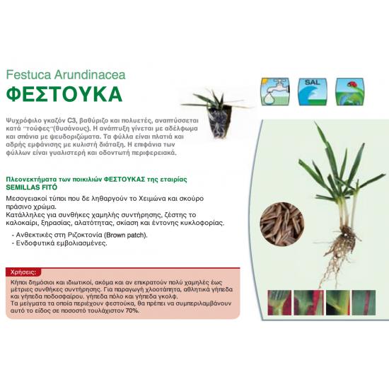 Σπόρος Γκαζόν MERIDA - Festuca Arundinacea